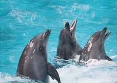 Dolphinarium of Dubai